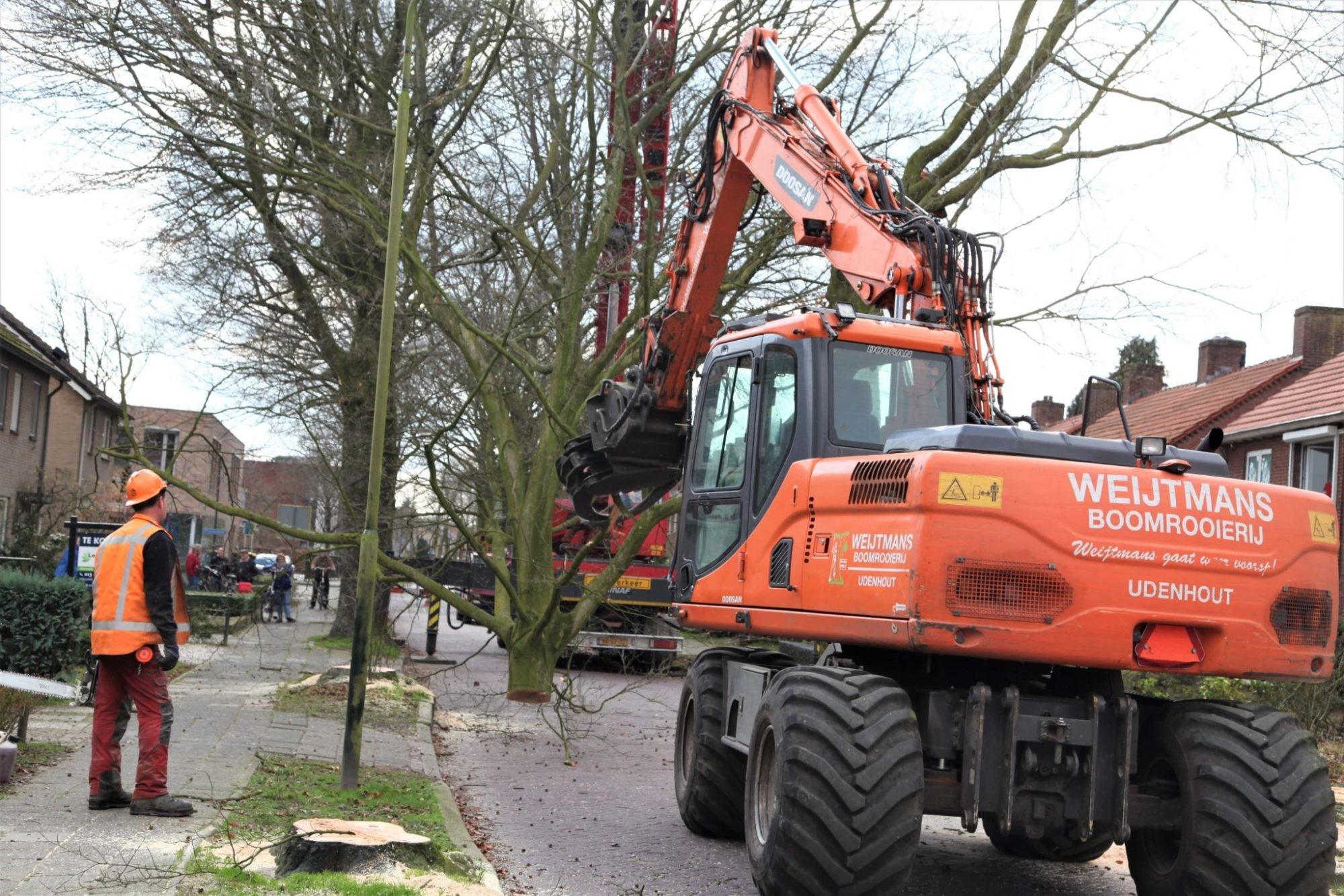 Boom rooien Roosendaal
