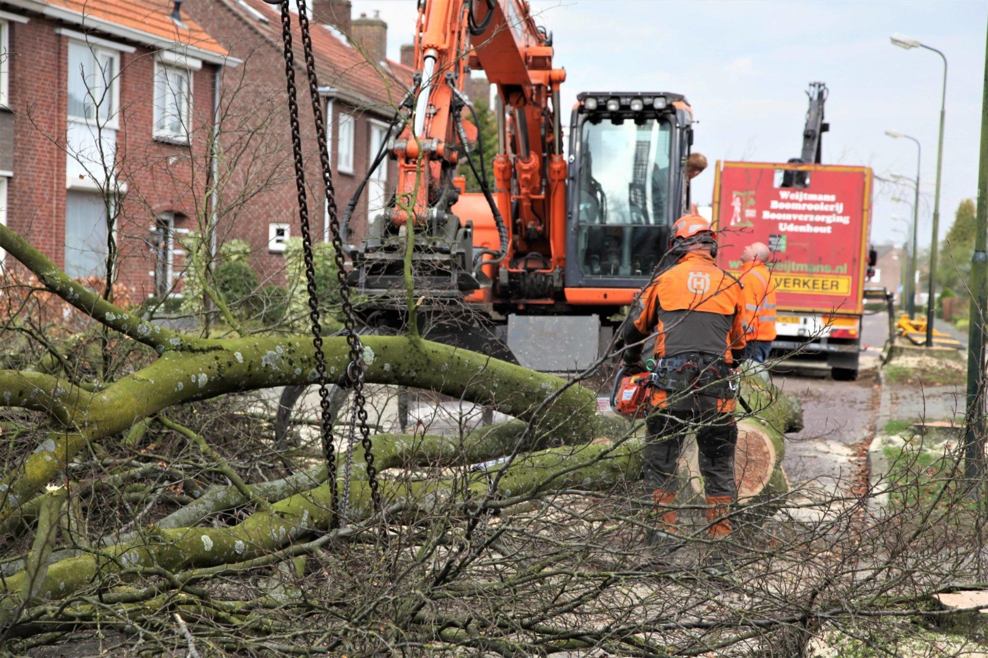 Bomen rooien Eindhoven